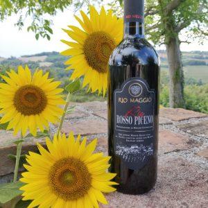 Rosso Piceno rode wijn solevina italiaans brasschaat