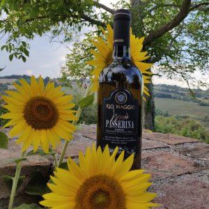 Passerina witte wijn solevina italiaans brasschaat